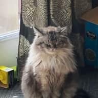 Profile image for pet sitters Julie & Ben