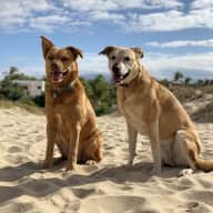 Profile image for pet sitters Sue & Scott