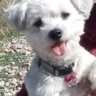 Profile image for pet sitters Kippy & Stephen