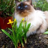 Profile image for pet sitter Rebekah