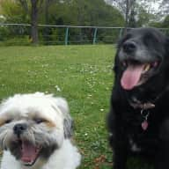 Pet Sitter Needed For Our Shih Tzu and Ptattersdale Terrier X Springer Spaniel For One Week In St Helens