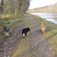House sitter needed for a few days in November to look after our three dogs - lovely tranquil location