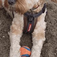 house sitter,dog walker