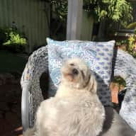 Looking for pet sitter who loves cats and dogs with personality  in cottage retreat close to city!