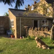 Care for our beautiful elderly Golden Retriever on the edge of the Cotswolds