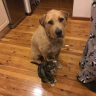 House/Pet sitter needed