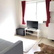 Dog sitter needed for gorgeous golden retriever in Tokyo