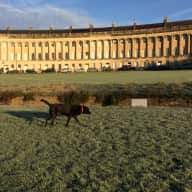 Royal Crescent Bath and Lovely Black Labrador