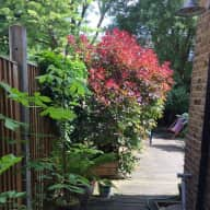 North London, easy access to central London - cat Misty and plants need caring!