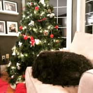 Spend Christmas Near Toronto with 2 Lovable Portuguese Water Dogs