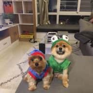 Seeking a responsible pet sitter!