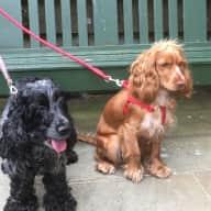 Two friendly dogs, Northampton