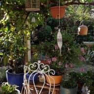 Lovely garden and placid elderly dog