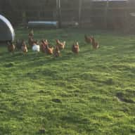We are looking for someone to look after our dog, hens and pigs.