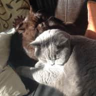 Harleston, Norfolk | house & catsitter needed September - November
