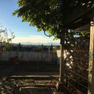 Cute dog & cozy apartment with a view of the Olympics seeking a sitter!