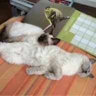 Catsitter needed for leafy Sevenoaks