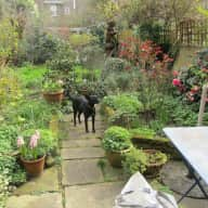 House and dog sitter for Bella in Camden Town in London