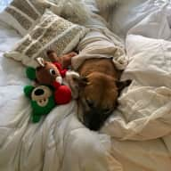 URGENT - Sitter needed in Tribeca for Buddy