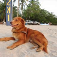 Dog/House sitter needed in Tamarindo, Guanacaste, Costa Rica for about 6 weeks in May/June.