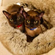 Comfy Battersea home for 2 cats and a holiday sitter