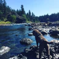 House/Pet sitter needed for 3 weeks in February and March in the Pacific Northwest, U.S.