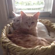 Two adorable young cats, Rose and Sally, need gentle and kind cat-lover-sitter(s)