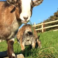 Kind, reliable Housesitter needed for my animals and rural home