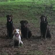 Dartmoor, 5 dogs and 2 cats looking for lots of love and exercise
