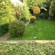 Lovely East London house with 2 cats and large garden