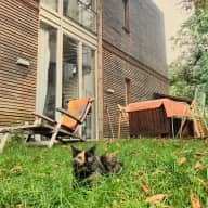 Two indoor-cats are looking for a wonderful sitter - house in Berlin