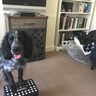 Loveable Lab, Lively Cocker and Loopy Cat all would love to share their home with you whilst their humans are away.