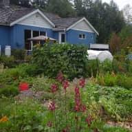 Big yard and garden , older cat