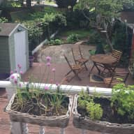 Cockapoo sitting in Shropshire