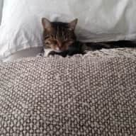 Cat and Flat Sitter Needed in Crouch End