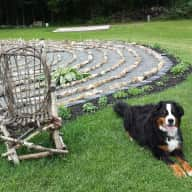 Pet Sitter needed for Dog, 2 Cats & Fish for 2 weeks near Kingston ON Canada