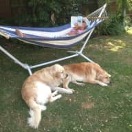 Pet sitter needed for two gorgeous Golden Retrievers - for 3 weeks