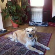 Pet Sitter needed for 2 dogs for 6 weeks in Edinburgh
