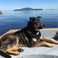 Pet sitter needed for our 12 year old shepherd mix