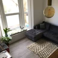 Caring sitter for cute cat in London flat needed