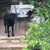 lovely hilltop location umbria pet and house sitting help