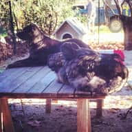 Pet sitter needed for dog, cat, chickens and horse in the South of France