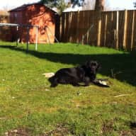 House and Dog sitter required for end of August: 2 bed cottage and black lab