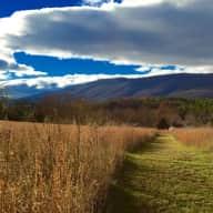 Blue Ridge Mountain Serenity and Three Goldens