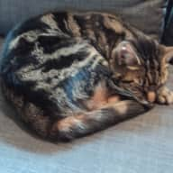 London St John's Wood house and pet sit