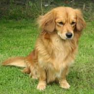 Short house/dog sit in Norfolk in April