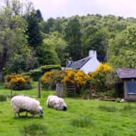 Small cottage above Loch Ness with loving cat and two retired sheep