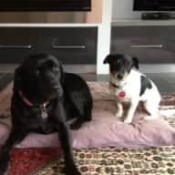 We require a house sitter to care for our two dogs
