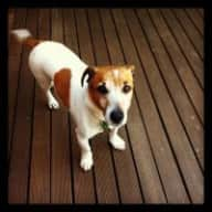 House in Los Feliz with Jack Russell