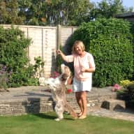 To look after my 9 year old bearded collie dog called Roxy, house and garden.
